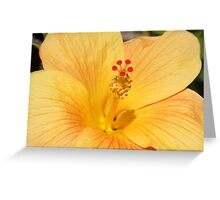Golden Hibiscus Greeting Card