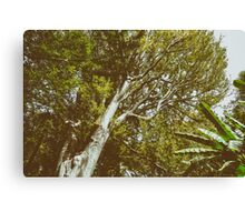 Green Tree Foliage In Summer Canvas Print
