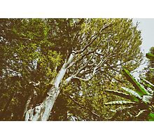 Green Tree Foliage In Summer Photographic Print