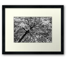 Tree Foliage Abstract Framed Print