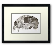 Feline Skull Drawing Framed Print