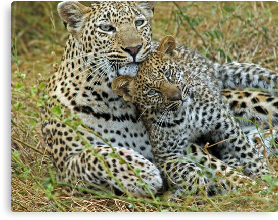 Motherly love!(This is so cuddly!) by jozi1