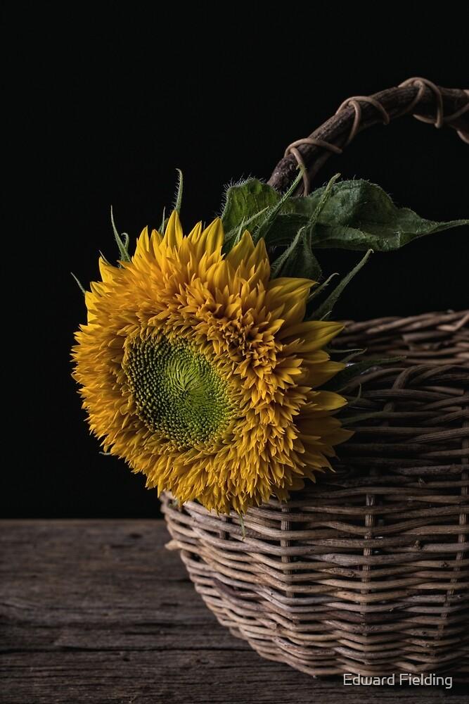 Sunflower in a basket by Edward Fielding