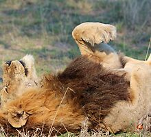 I am completely relaxed!! by jozi1