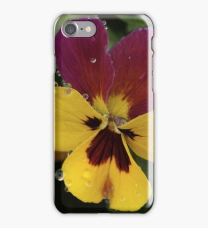 Raindrops On Multicolour Pansy iPhone Case/Skin