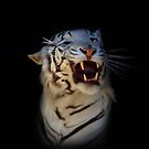 White Tiger by Declan Carr