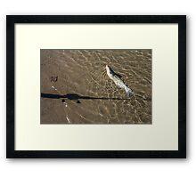 Missouri Catfish Framed Print