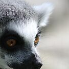 Ring-Tailed Lemur by ElviraTSquirrel