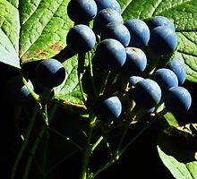 Blue Berries in the Woods by lorilee