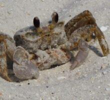 Crab in Headlights Sticker