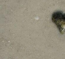 My Heart Belongs to the Sea Shore Sticker
