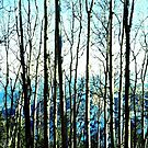 Trees by taylormorrill