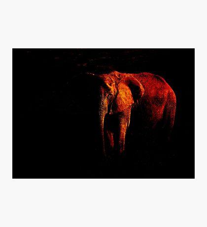 Save the Elephant Photographic Print