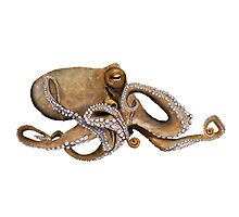 Pale Octopus Photographic Print