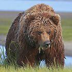 Alaskan Brown Brown Bear Sow by jozi1
