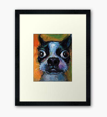 Cute Boston Terrier puppy dog portrait by Svetlana Novikova Framed Print