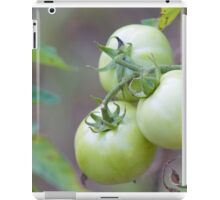 Growing Strong Tomato Photograph iPad Case/Skin