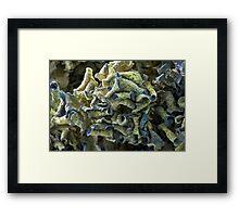 Curled Dried Blue Hydrangea Framed Print