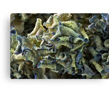 Curled Dried Blue Hydrangea Macro Canvas Print