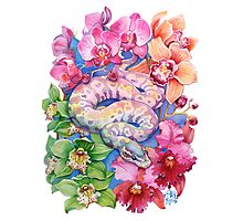 """""""Year of the Snake"""" - Chinese Zodiac Watercolour  Photographic Print"""