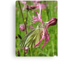 Down In The Meadow Canvas Print