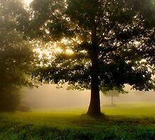 Mighty Oak by NatureGreeting Cards ©ccwri