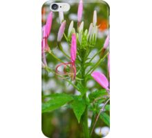 Spider Flower iPhone Case/Skin