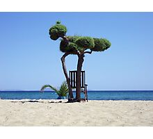 The tree and the chair Photographic Print