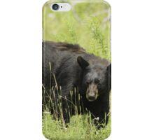 Black Bear in a pasture iPhone Case/Skin