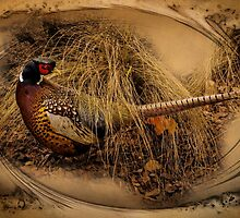Ringed-Neck Pheasant by CarolM