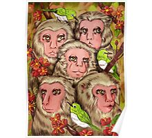 Macaques! Poster