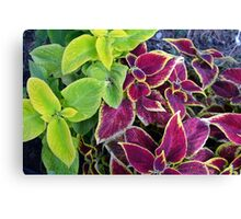 Natural background with green and purple leaves. Canvas Print