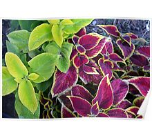 Natural background with green and purple leaves. Poster