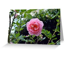 Pink rose on a natural green leaves background. Greeting Card