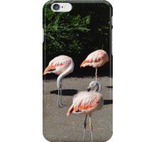 Flamingo Flock iPhone Case/Skin