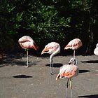 Flamingo Flock by Dani LaBerge