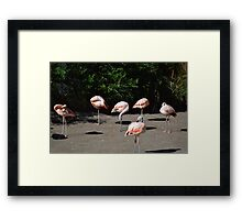 Flamingo Flock Framed Print