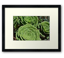Pattern with succulents. Framed Print
