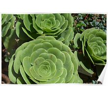Pattern with succulents. Poster