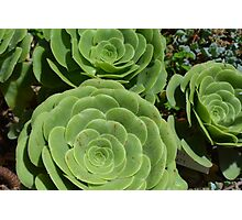 Pattern with succulents. Photographic Print