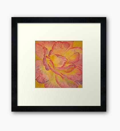 Yellow Pink Rose Framed Print