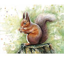 Cute Squirrel Watercolor Painting Photographic Print