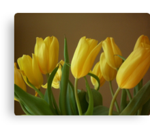 Yellow, My Favorite Tulips Canvas Print