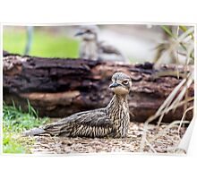 Brush-Stone Curlew at Moonlit Sanctuary Poster