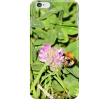 Pollen collection iPhone Case/Skin