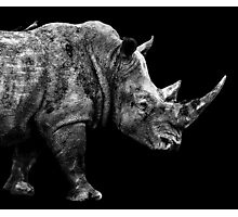 SAFARI PROFILE - RHINO BLACK EDITION Photographic Print