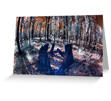 New growth in burnt out forest Greeting Card