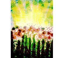 Sunshine on the Garden  Photographic Print