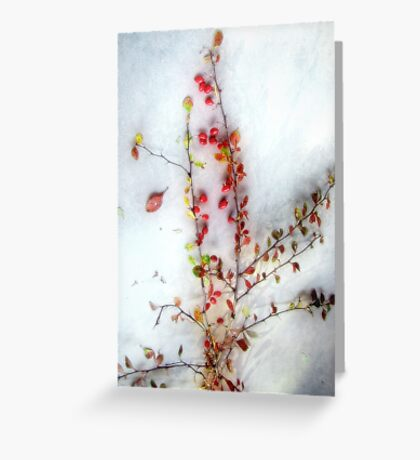 Winter Red Barberries Greeting Card
