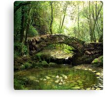 The forest pond Canvas Print